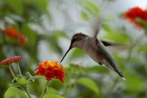To_Catch_A_Hummingbird